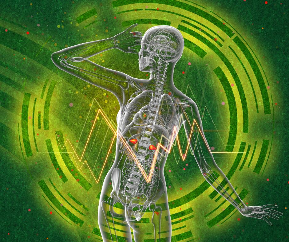 adrenal-glands-stres